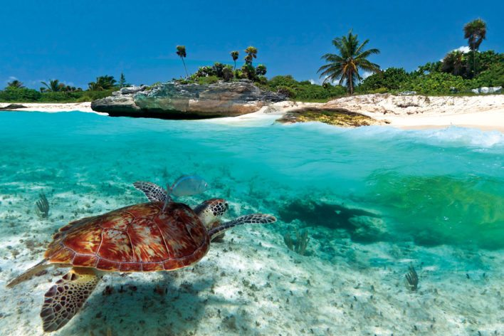 There's so much to discover in the Caribbean, both above and below the sea! Image curtesy of mycaribbeanlife.com.