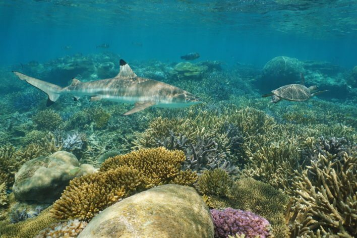 travel on flying blue to south pacific and see the New Caledonia Shark