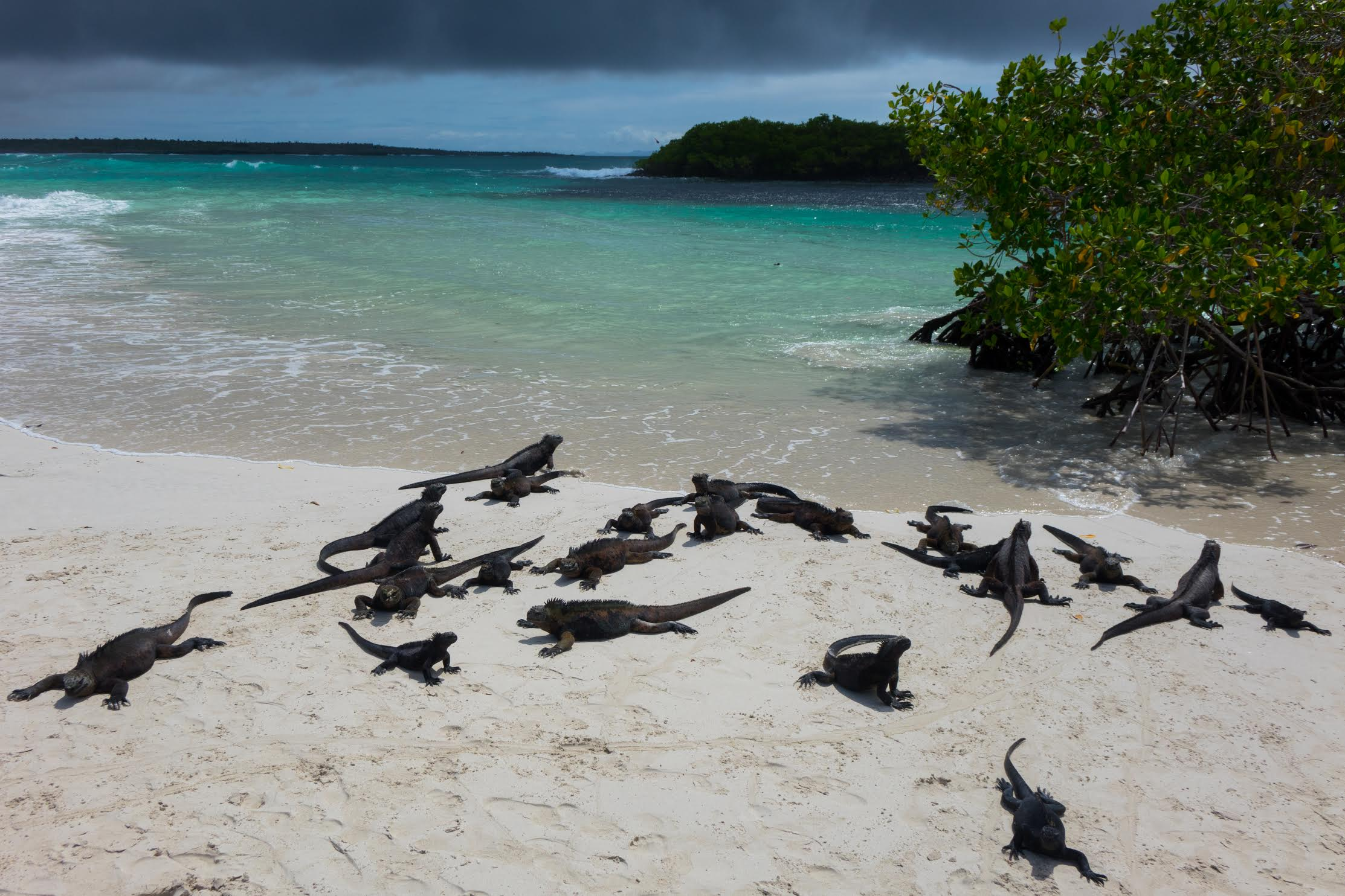 Real Redemptions, The Galapagos Islands (3)