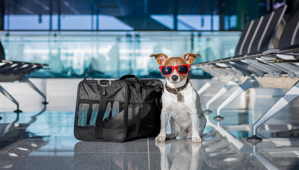 The Top 10 Most Pet-Friendly Airports in the U S  [Study]