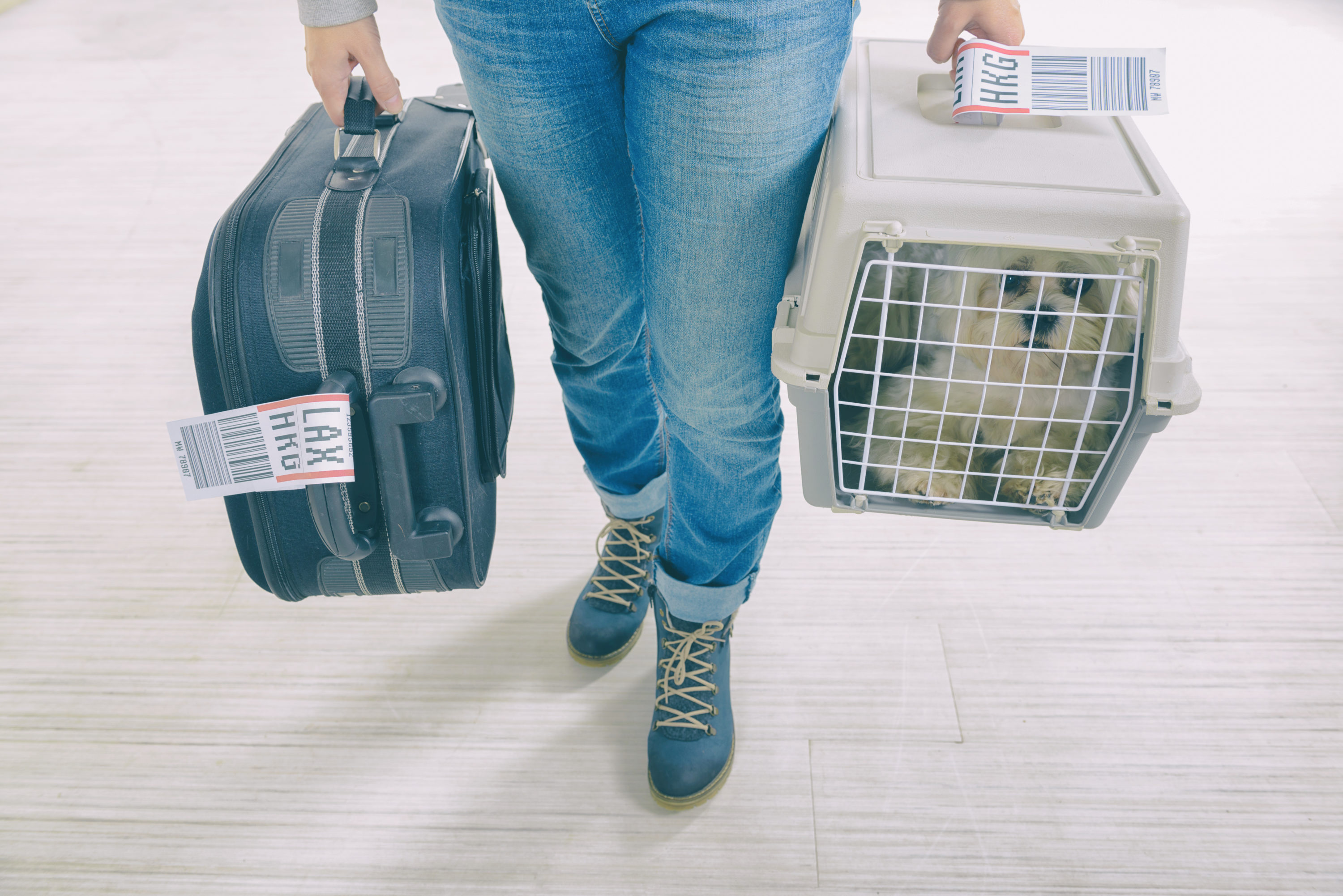 The Best and Worst U S  Airlines To Fly with Your Pet [Data