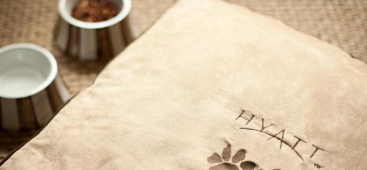 Dog Bed Pillow Hyatt Pet Friendly Program